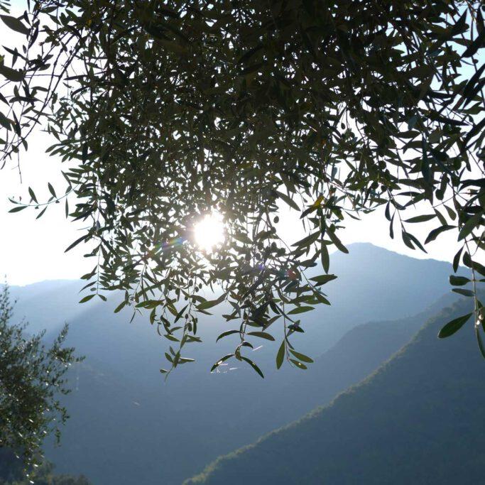 il wokini - Blick in die Berge